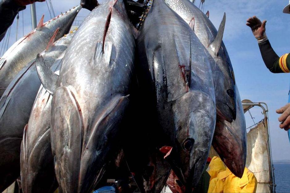 A Fishy Find | Tribalmystic stories