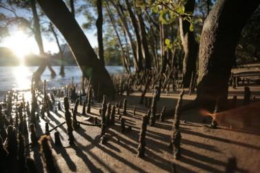 Mangroves-1024x682