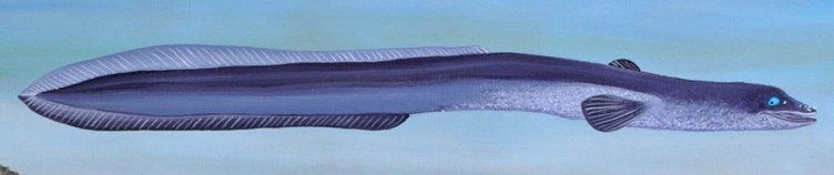 cropped-flying-eel-long