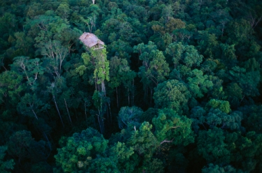 Irian Jaya's Kombai and Korowai people live in houses built in the treetops.