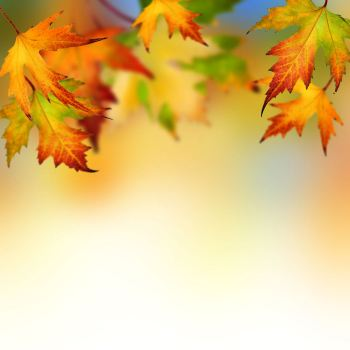autumn-leaves-backgrounds-wallpapers