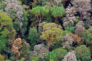 4-tree-diversity-data
