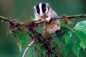 8-possum-data
