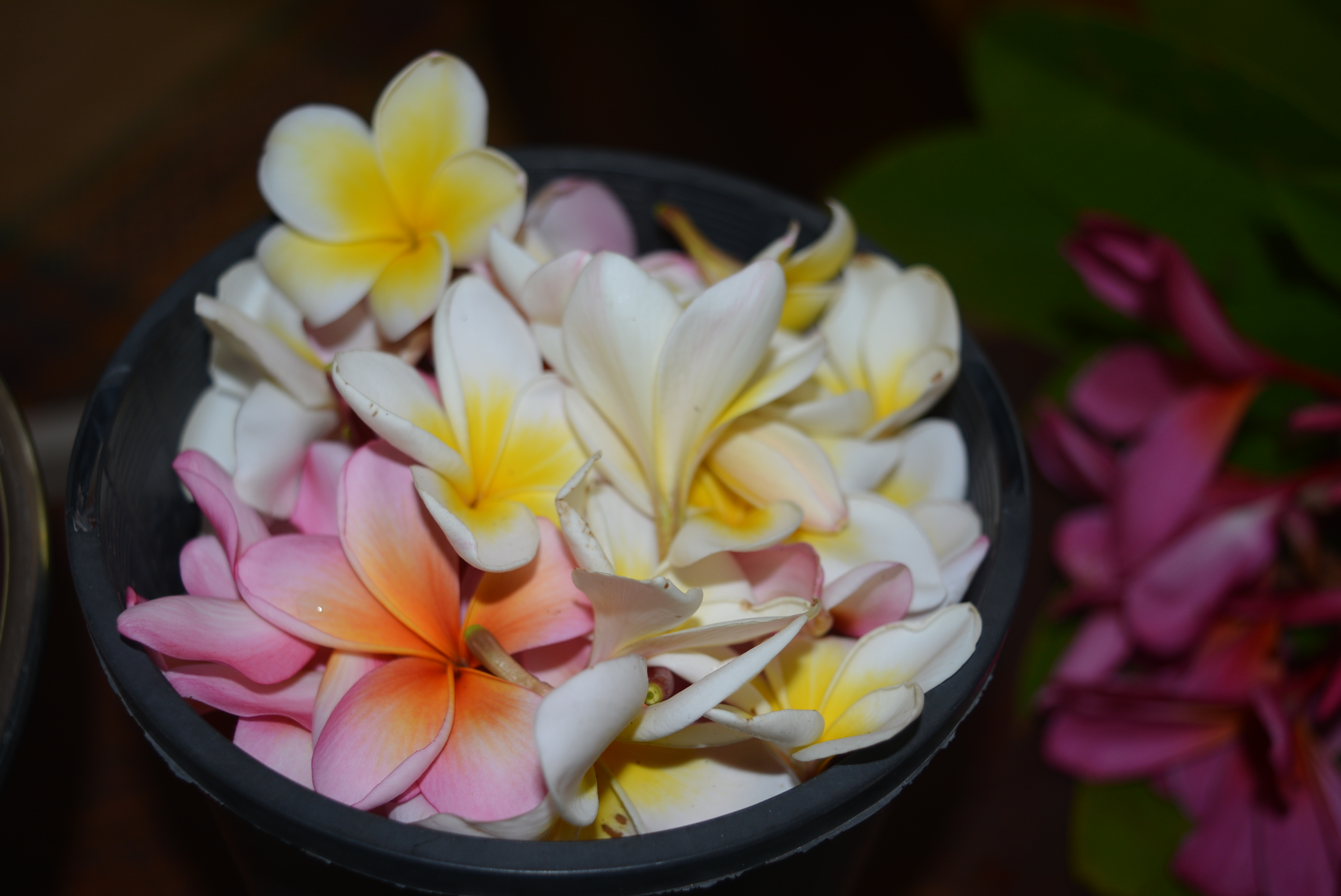 A Lei For Marcelle