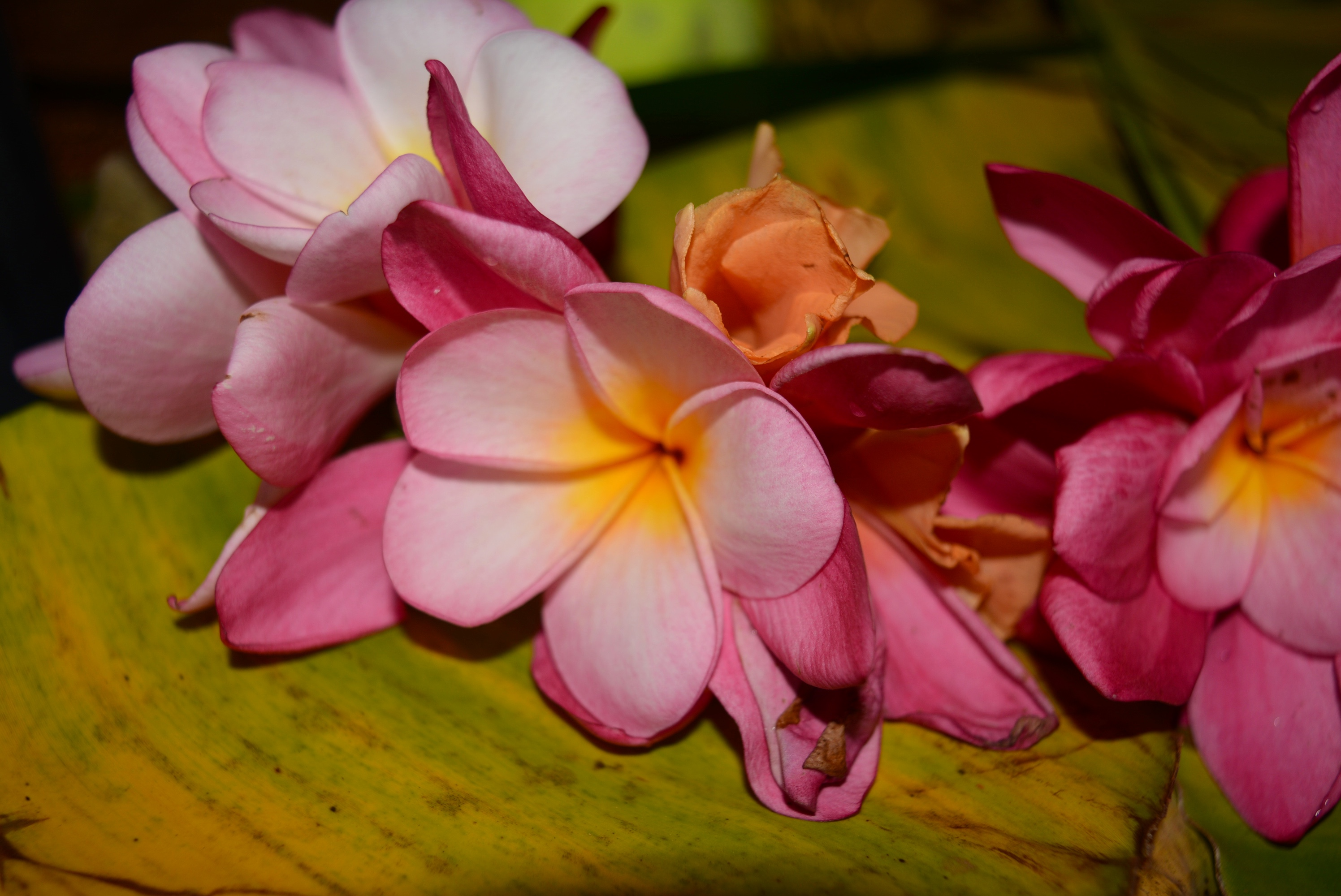How To Keep Flowers Fresh Overnight A Lei For Marcelle Tribalmystic Stories